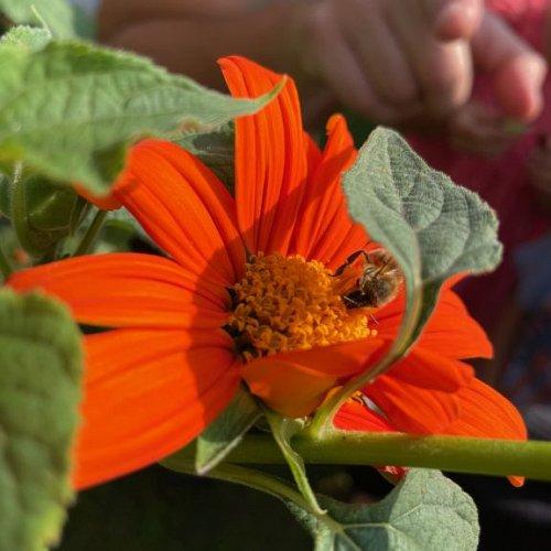 Bild zum Weblog Lerngarten