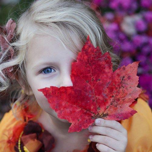 Bild zum Weblog Herbstdetektive